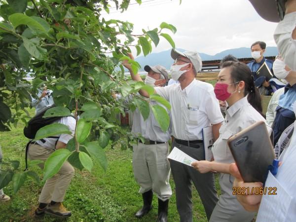 2021年6月農作物の雹害を視察する加藤鮎子